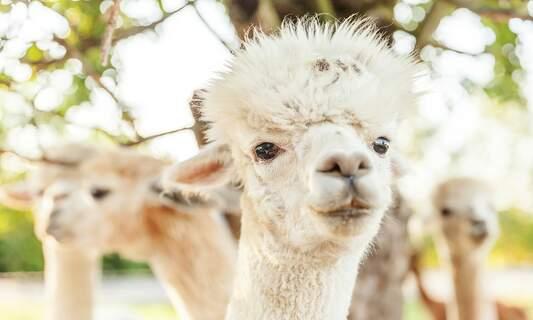 Six alternative animal parks in the Netherlands