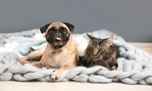 2019 most popular names for dogs and cats in the Netherlands