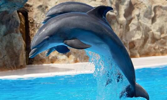 Dolphins at Hardewijk's Dofinarium will no longer perform tricks in shows