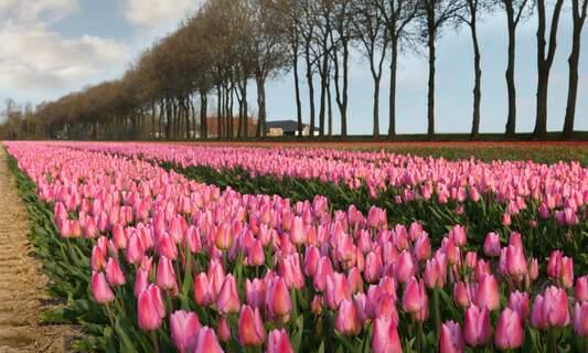 [Video] Spring in Amsterdam