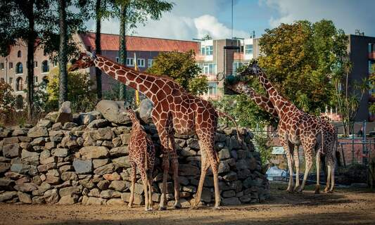 The five best zoos in the Netherlands
