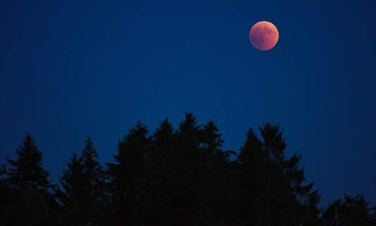 Total lunar eclipse: Super Wolf Blood Moon visible in the Netherlands