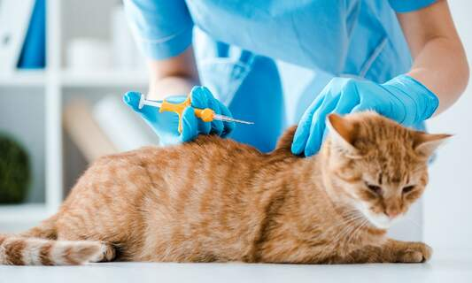 Two Dutch cities to introduce mandatory microchipping for cats