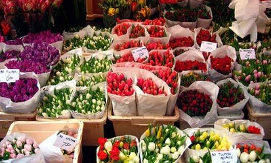 Dutch Flower Power still going strong