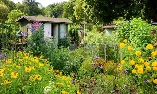 Volkstuinen: The allotments of the Netherlands