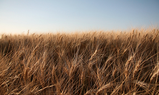 Netherlands ranks 5th in 2013 Global Food Security Index