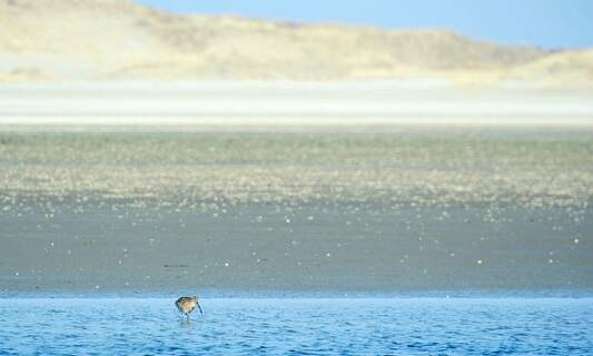 Dutch island goes back to nature