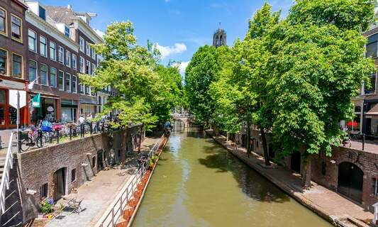 Utrecht to plant 900 trees to honour 900th birthday
