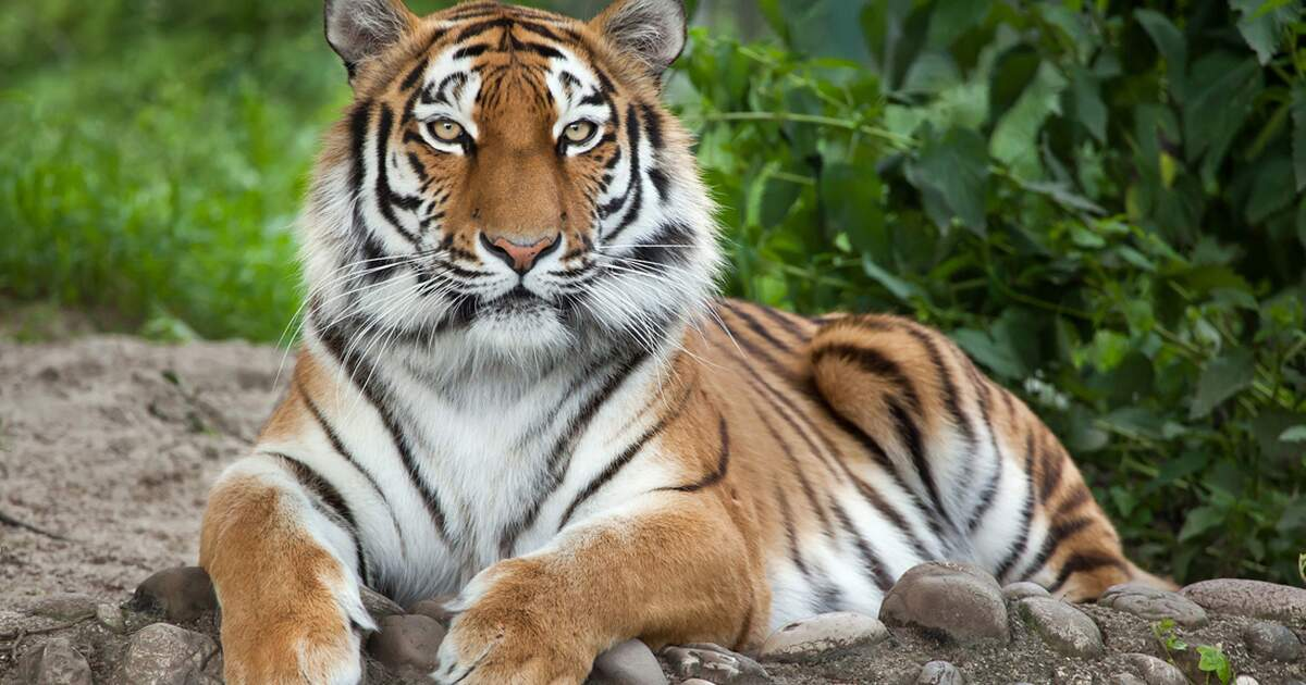 Zoos & Animal parks in the Netherlands